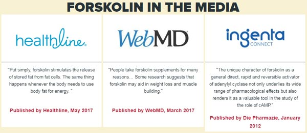Forskolin Pure Reviews