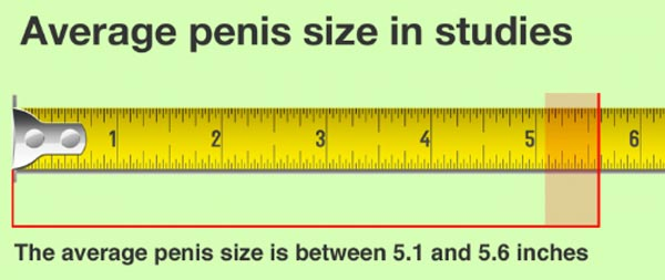 global average penis size